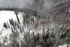 Widok z lotu ptaka nad zamarznięty las obraz stock