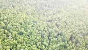 Widok z lotu ptaka namorzynowy lasowy baldachim zbiory wideo