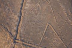 Widok z lotu ptaka Nazca linia, pająk, Peru obraz stock