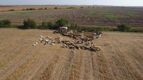 Widok z lotu ptaka od trutnia nad sheepfold zbiory
