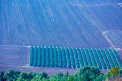 Widok z lotu ptaka orny pole i oliwna plantacja obraz stock