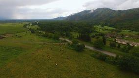 Widok z lotu ptaka paśnik z krowami na zielonym wzgórzu w starej wiosce, uprawia ziemię biznes zbiory