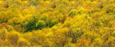 Widok z lotu ptaka parkland w spadku Jesień lasu wzgórza Panoramiczny krajobraz obrazy stock