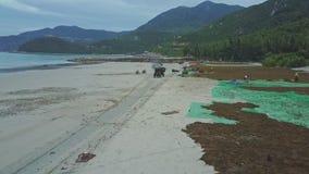 Widok Z Lotu Ptaka Pickup Rusza się truteń na Mokrej piasek plaży z algami zbiory wideo