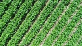 Widok z lotu ptaka plantaci pole zdjęcie wideo