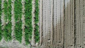 Widok z lotu ptaka plantaci pole zbiory