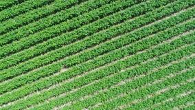 Widok z lotu ptaka plantaci pole zbiory wideo