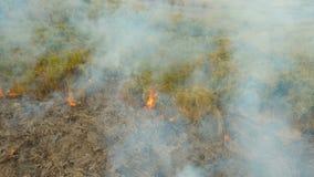 Widok z lotu ptaka pożar lasu Busuanga, Palawan, Filipiny zdjęcie wideo