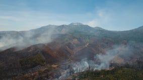 Widok z lotu ptaka pożar lasu Jawy wyspa, Indonezja zdjęcie wideo