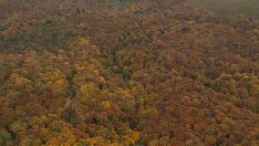 Widok z lotu ptaka przy jesień lasem zdjęcie wideo