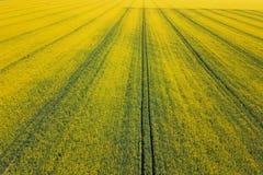 Widok z lotu ptaka rapeseed żółty pole Widok z lotu ptaka rolniczy Obrazy Royalty Free