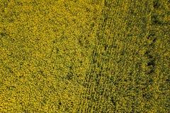 Widok z lotu ptaka rapeseed żółty pole Widok z lotu ptaka rolniczy Zdjęcie Royalty Free