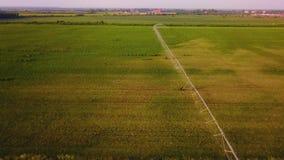 Widok z lotu ptaka rolniczy kropidło w arbuza polu zbiory wideo