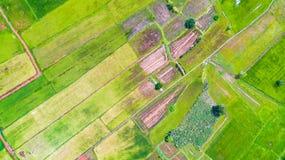 Widok Z Lotu Ptaka Ryżowy irlandczyk obraz stock