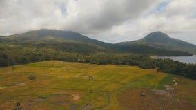 Widok z lotu ptaka ryżowy pole Filipiny zdjęcie wideo