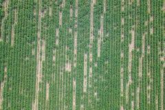 Widok z lotu ptaka soi pole Młody soi widok z lotu ptaka Zdjęcie Royalty Free