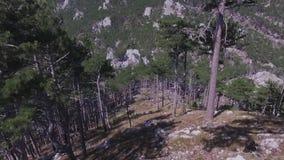 Widok z lotu ptaka sosna las z góra krajobrazem strzał Powietrzny odgórny widok zieleni drzewa w lasowym Dzikim lesie zbiory