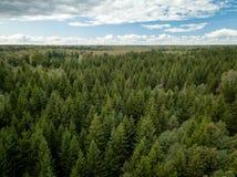 Widok z lotu ptaka sosnowy las z ciężkimi chmurami w tle fotografia royalty free