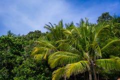 Widok z lotu ptaka tropikalni drzewa nad nieba tłem obrazy stock