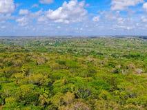 Widok z lotu ptaka tropikalny las, dżungla w Praia Robi forte, Brazylia fotografia royalty free