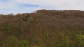 widok z lotu ptaka Wiele bociany lata w lesie zbiory wideo