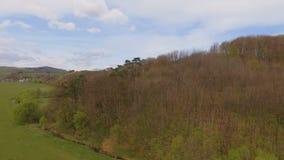 widok z lotu ptaka Wiele bociany lata w lesie zdjęcie wideo
