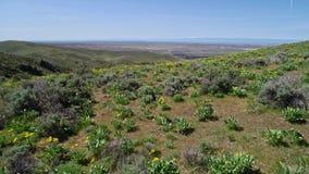 Widok z lotu ptaka wildflowers kwitnie w pogórzach nad Boise Idaho w wiośnie zbiory