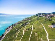 Widok z lotu ptaka winnicy w Lavaux regionie - Terrasses De Lavaux Obrazy Royalty Free