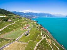 Widok z lotu ptaka winnicy w Lavaux regionie - Terrasses De Lavaux Fotografia Royalty Free