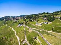 Widok z lotu ptaka winnicy w Lavaux regionie - Terrasses De Lavaux Zdjęcie Stock
