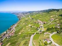 Widok z lotu ptaka winnicy w Lavaux regionie - Terrasses De Lavaux Zdjęcia Stock