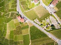Widok z lotu ptaka winnicy w Lavaux regionie - Terrasses De Lavaux Zdjęcia Royalty Free