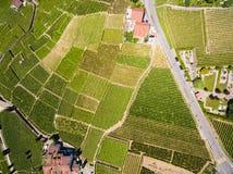 Widok z lotu ptaka winnicy w Lavaux regionie - Terrasses De Lavaux zdjęcie royalty free