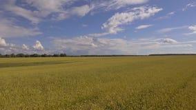 Widok z lotu ptaka złoty pszeniczny pole Powietrzny wideo zdjęcie wideo