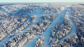Widok z lotu ptaka zamarznięty las w zimie i narcie tropi przeciw niebieskiemu niebu footage Piękny zimy landscape zdjęcie wideo