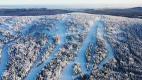 Widok z lotu ptaka zamarznięty las w zimie i narcie tropi przeciw niebieskiemu niebu footage Piękny zimy landscape zbiory wideo