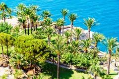 Widok Z Lotu Ptaka Zieleni drzewka palmowe I Błękitny ocean Zdjęcie Royalty Free