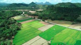 Widok z lotu ptaka zieleni prostok?t?w ry? pola na s?onecznym dniu Tropikalni krajobrazowi ry?owi pola, g?ry, drzewka palmowe _ zbiory