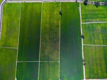 Widok z lotu ptaka zieleni ryż uprawia ziemię w Phichit, Tajlandia fotografia royalty free