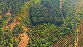 widok z lotu ptaka Zielony drewno W Wielkiej dolinie zbiory wideo