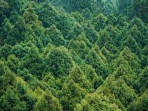 Widok z lotu ptaka zielony Sosnowy las w Tajwan od Linowego sposobu wagonu kolei linowej obraz stock