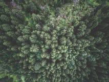 Widok z lotu ptaka zielony świerkowy las Zdjęcia Stock