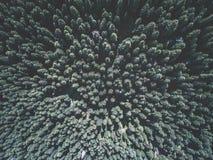 Widok z lotu ptaka zielony świerkowy las Obraz Stock