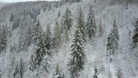Widok z lotu ptaka zim góry zakrywać z sosnami Niski lot nad śnieżnym świerkowym lasowym pięknem przyroda dalej zdjęcie wideo