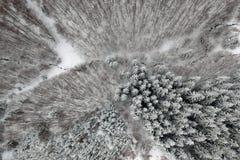 Widok z lotu ptaka zima las obraz royalty free