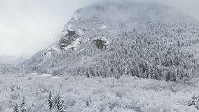 Widok z lotu ptaka zima las na chmurnym dniu Piękna zimy natura świerczyna i sosna w śniegu góra zbiory