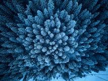 Widok z lotu ptaka zima las zakrywający w śniegu z góry Sosny i świerczyny lasowy odgórny widok Zimny śnieżny pustkowie zdjęcia royalty free
