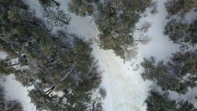 Widok z lotu ptaka zima marznący las zakrywający w śniegu Obraz Royalty Free