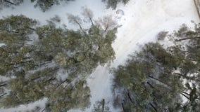 Widok z lotu ptaka zima marznący las zakrywający w śniegu Zdjęcie Stock