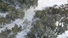 Widok z lotu ptaka zima marznący las zakrywający w śniegu Fotografia Stock